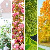 Collage di quattro stagioni. set di splendidi paesaggi in inverno, primavera, estate e autunno