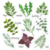Vektor gyógynövények