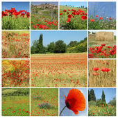 Rural landscape with red poppies - collage , Italia, Europe