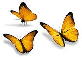 Három sárga pillangó, elszigetelt fehér background