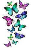 Mnoho různých motýlů, izolovaných na bílém pozadí