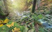 Herbst-Wald-Szene von einem Fluss