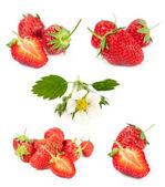 Sada plody a květy jahodníku