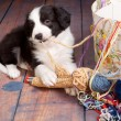 Постер, плакат: Knitting puppy