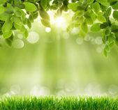 Přírodní zelené pozadí