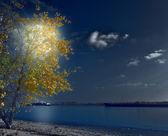 Autumn poplar