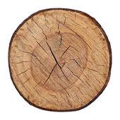Texturu dřeva řezané stromu kmen vektoru