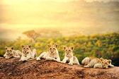 Együtt várja oroszlán kölyke