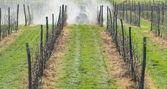 Spraying orchard