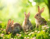 Králíci. výtvarné řešení roztomilý malý velikonoční zajíčky na louce