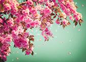 Sakura květin pozadí umění design. jarní sacura květy