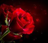červená růže květ izolovaných na černou. den svatého Valentýna