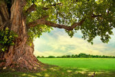 Green tree nature landscape