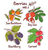 Sea buckthorn dog rose blackberry and currant berries set 2