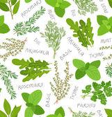 Herbs seamless pattern on white