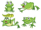 Detailed illustration of green frog on white background