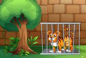 Illustration of a tiger inside a steel cage