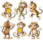 Hravé divokých opic