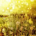 Постер, плакат: Spring field with dandelions on bright sunny day