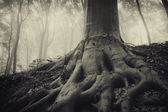 Roots of an old tree in a dark misty forest