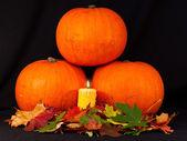 A trio of pumpkins against a black background
