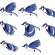 Постер, плакат: Blue Jay Bird Flying Animation