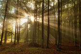 Beautiful morning scene in the forest with sun rays and fog