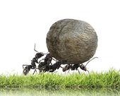 Tým mravenců valí kámen do kopce