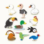 Cute colorful vector bird set
