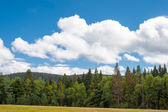 Panorama landscape view over pine tree and clouds black forest Germany
