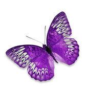Farfalla viola volano