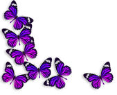 Sfondo con farfalla viola