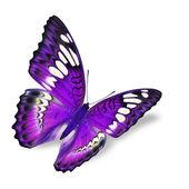 Bella farfalla viola volano isolato su sfondo bianco
