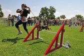 Kutya verseny és Taming kihívás