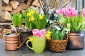 Tulipány, sněženky a Narcis květy