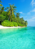 Landscape of tropical island beach with palms