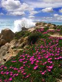 Algarve, Portugalsko s krásné pobřeží během jarní čas