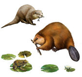 Beaver eating stick, pretty otter with a fish in its mouse, frog on lilly leaves, toad.