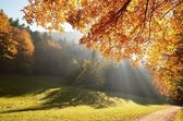 Forest with sun beam in autumn