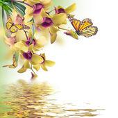 Sfondo floreale di orchidee tropicali e farfalla