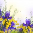 Постер, плакат: Blue irises with yellow daisies