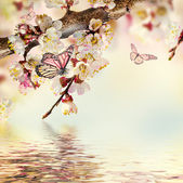 Apricot flowers with butterflies