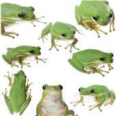 Zelená žába koláž