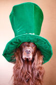Roter Hund mit Hut