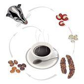 Kouření horké kávy zrnkové kávy civet