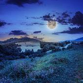 Jehličnatý Les na strmém horském svahu v noci