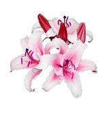 PIN květiny