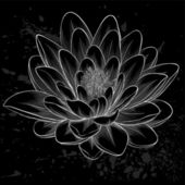 Black and white lotus flower painted in graphic style isolated