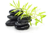 Vlhké zelené rostliny na černý kámen