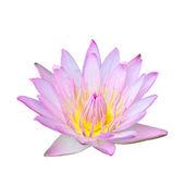 Jeden Lotosový květ izolované na bílém